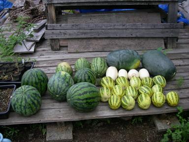 収穫2_11_07_30