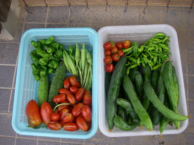 収穫1_11_07_30