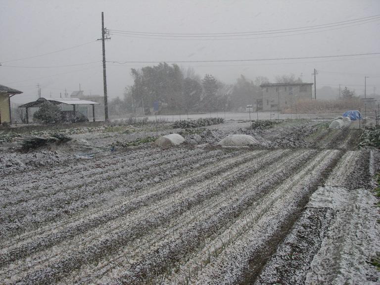 雪13_01_26