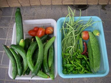 収穫11_08_01
