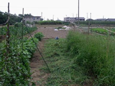 草刈り11_07_31