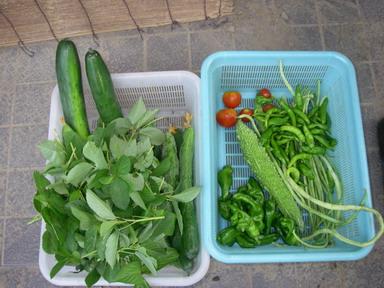 収穫11_08_02