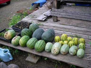 収穫2_11_08_02