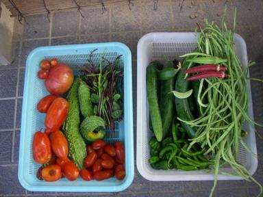 収穫11_08_04