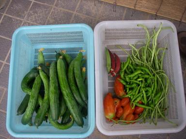 収穫11_08_06