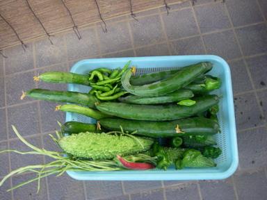 収穫11_08_08