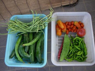収穫H23_08_09