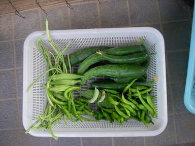 収穫11_08_10