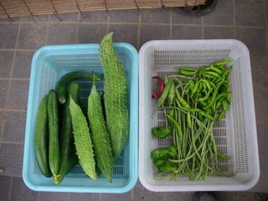 収穫11_08_11