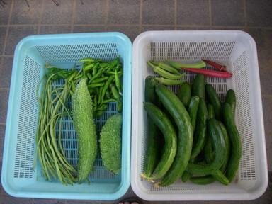 収穫11_08_12