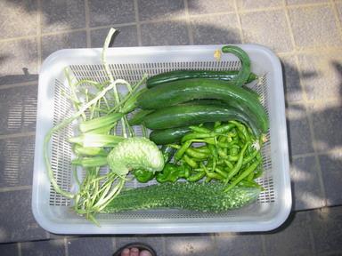 収穫11_08_13