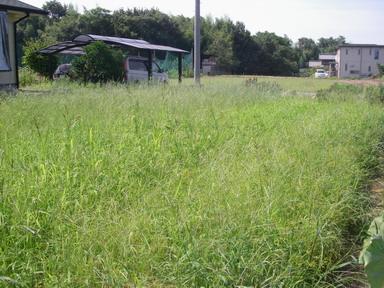 草刈前11_08_13