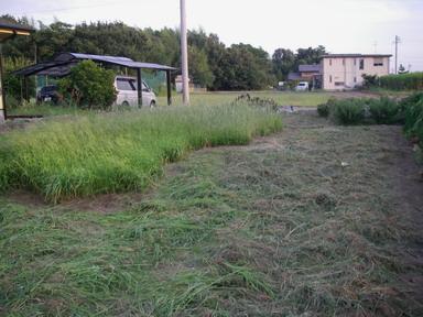 草刈2_11_08_13
