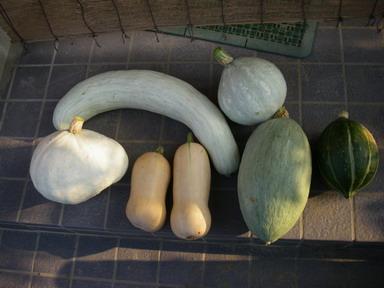 収穫1_11_08_14