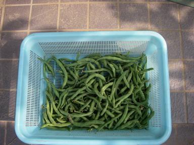 収穫3_11_08_14