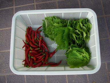 収穫4_11_08_14