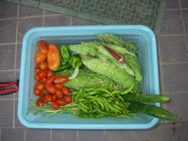 収穫11_08_16