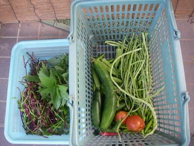 収穫11_08_15