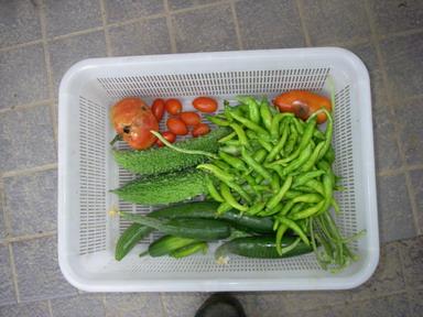 収穫11_08_17