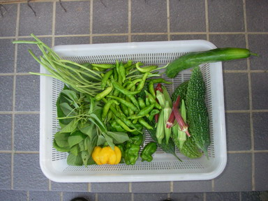 収穫11_08_18