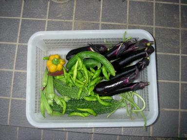 収穫11_08_19
