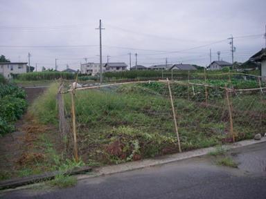 草刈夕方11_08_20