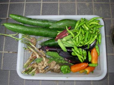 収穫11_08_20