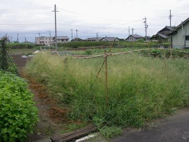 スイカ畑11_08_20