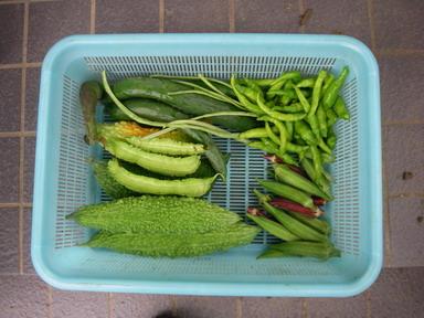 収穫11_08_21