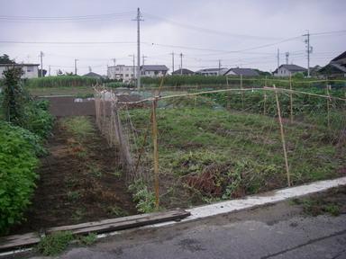 スイカ畑11_08_21
