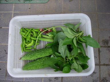 収穫11_08_22