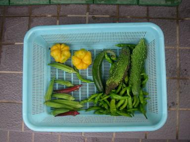 収穫11_08_23