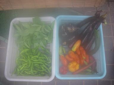 収穫11_08_27