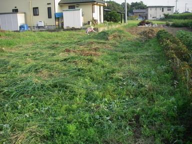 草刈後11_08_28