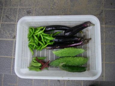 収穫11_08_28