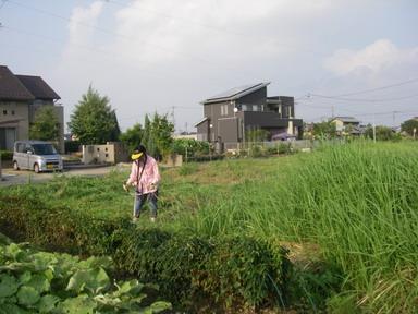 草刈11_08_28