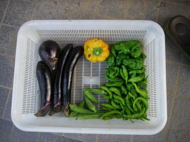 収穫11_08_29