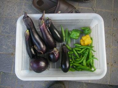 収穫11_08_30