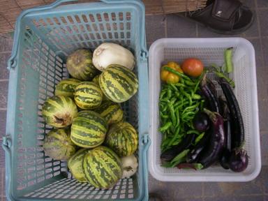 収穫11_08_31