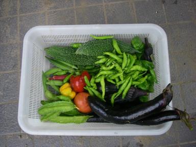 収穫11_09_01