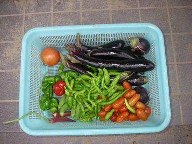 収穫11_09_02