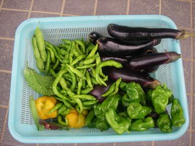 収穫11_09_03