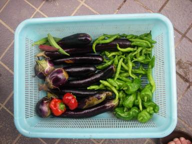 収穫11_09_04