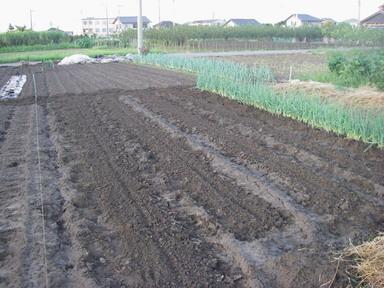 畝作り11_09_06