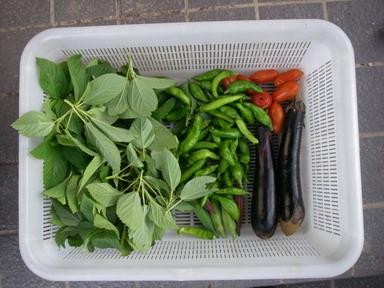 収穫11_09_06
