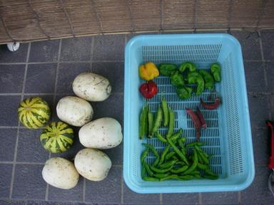 収穫11_09_07