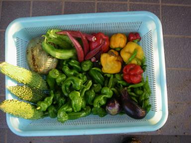 収穫11_09_15