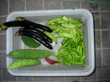 収穫11_09_20