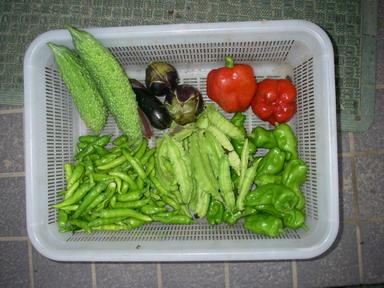 収穫11_09_21