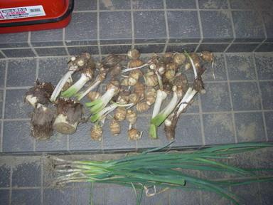 収穫11_09_10